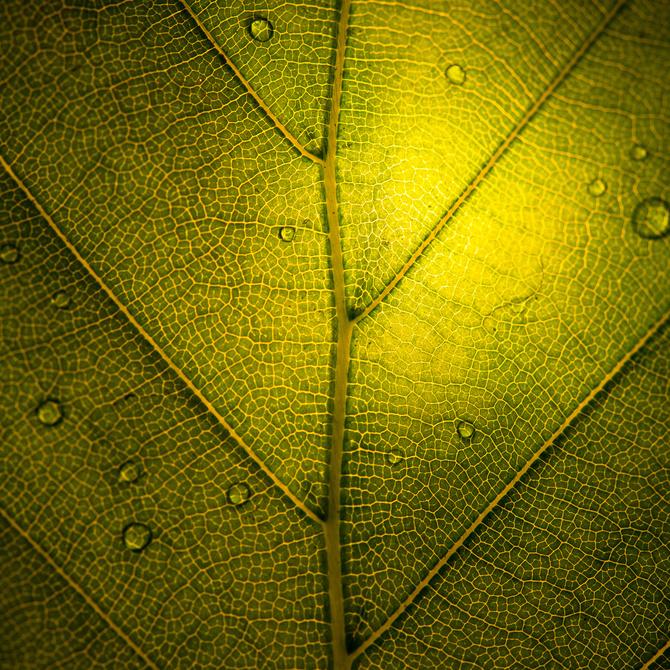 макро фото сечение листа дерева приятно, что свой